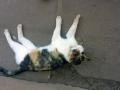 crevette-le-chat-png