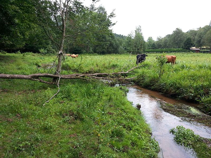 vaches-au-pre-jpg